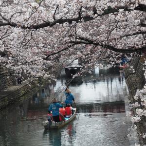 水都大垣の春2021(水門川、大垣城、郷土館の桜)3月27日撮影