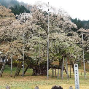 根尾谷の春と淡墨桜(2021年4月3日撮影)