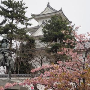 水都大垣の春(早咲き桜、菜の花、モクレン)2019年3月23日撮影
