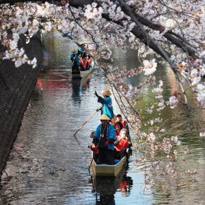 水都大垣の春(水門川の桜)2019年4月6日撮影