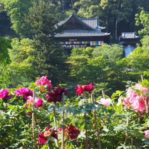 奈良・長谷寺の新緑(2019年5月4日撮影)