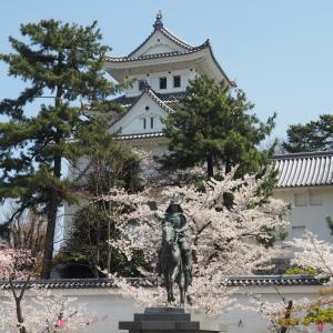 大垣城・郷土館の桜(2019年4月6日撮影)