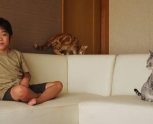 息子と猫~発達障害な一族~