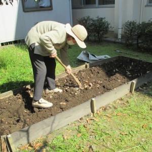 芋の苗植え ~通所リハビリ~