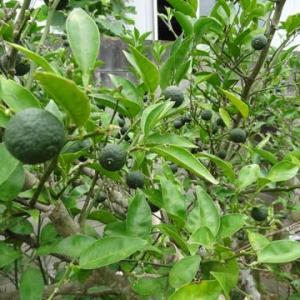 果樹園の状況
