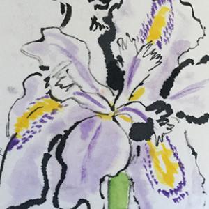 絵手紙 シャガの花