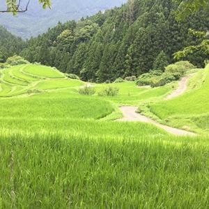 犬山嶽~大川原高原へ