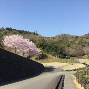 春と歩く!