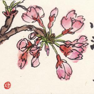 桜の絵手紙3枚