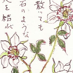 絵手紙 野イチゴの花 3枚