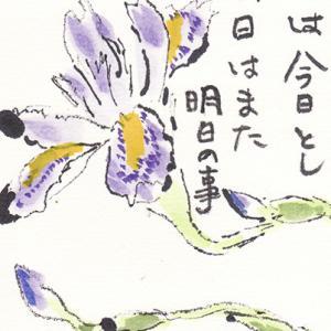 絵手紙 シャガの花 2点