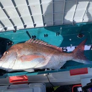 2馬力ゴムボートepisode9 安定のサゴシ祭り そして最後に大鯛