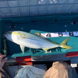 2馬力ゴムボートepisode11.12 釣り納と釣り初め