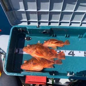 2馬力ゴムボートepisode31  タイラバでの釣果! ほぼ撃沈でした