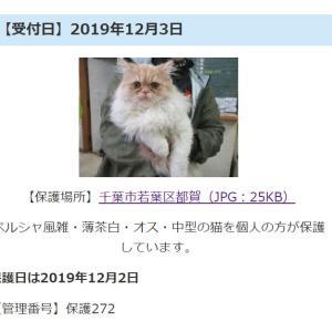<保護猫>くーちゃんに夢中( *´艸`)