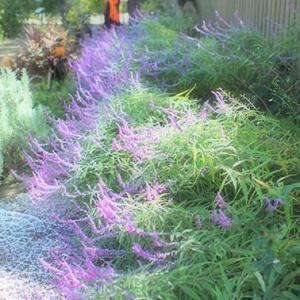 葦毛湿原 秋の花