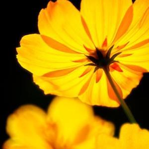 伊吹山の花 つづき