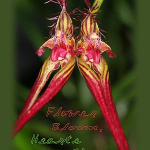 葦毛湿原の花 ミカワバイケイソウ オオバウマノスズクサ キンラン