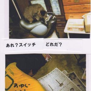 ダイソーがすきなおばちゃん(オリジナルコラボ曲)と過去の猫写真台詞漫画とオリジナルTシャツ