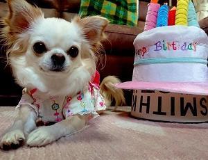 なっちゃんも元気に2歳のお誕生日を迎えました\(^o^)/