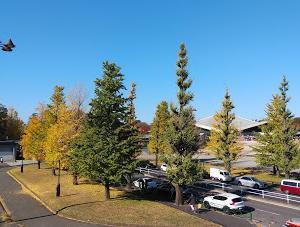 今日の駒沢公園は人出で賑やか(コロナ拡大といわれているが)