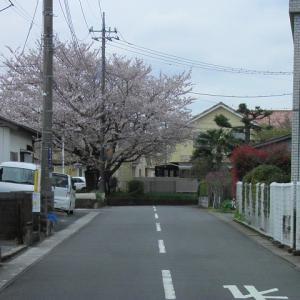 人がいない場所だって桜は咲くポタ ~ARIA家近所編~