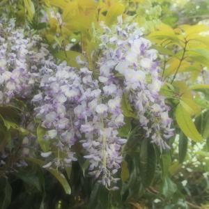 朝散歩とお花