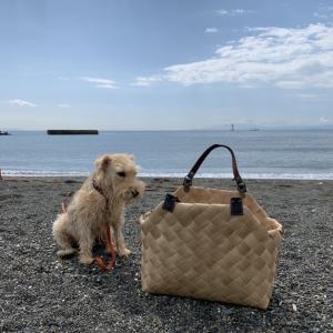 海でも活躍 ティムかごバッグ with わんこ