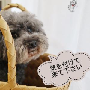 【お知らせ】台風接近 明日のレッスン