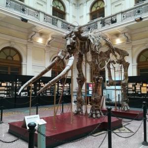 ジェノバの自然歴史博物館へ行こう!