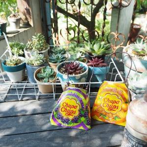多肉植物の秋の植え替えレポート