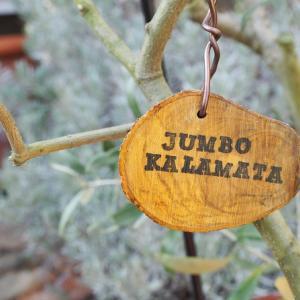オリーブの剪定枝で品種ネームプレート・改