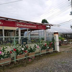 茨城県が誇る多肉狩りスポット!四国造園