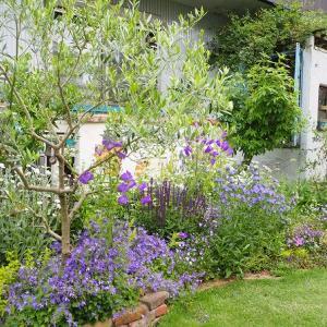 春を待つ花壇のお花たちの現在