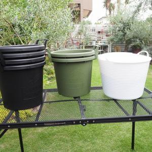 オリーブ・チェリニョーラを植えた鉢は