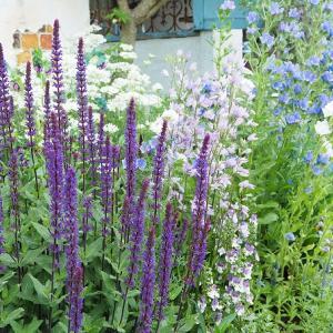 春の花壇を楽しむために今植えたい苗