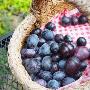 オリーブの黒い実で作るシロップ漬け