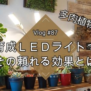 植物育成LEDライトの頼れる効果とは