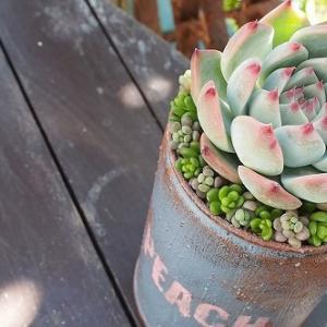 ステンシル&リメ缶DIYで桃太郎専用鉢作り