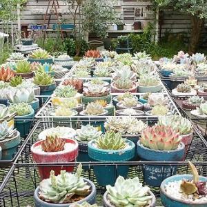 素焼き鉢の多肉植物にだけ底面吸水する理由