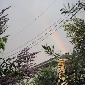 台風のようだったゲリラ豪雨でずぶ濡れ