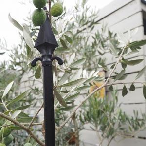 台風14号とオリーブに見つけた可愛い支柱