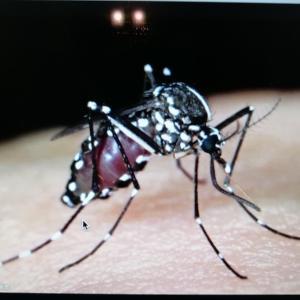 マレーシアは新型コロナウイルス だけじゃないんです!この感染にも気をつけないと! 油断禁物!