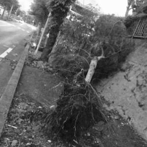 今年は台風の当たり年なのか・・・。