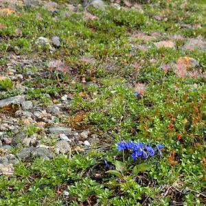 7月の山・・・旭岳から北海岳経由で黒岳に縦走