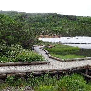 7月の山・・・姿見の池から当麻乗越へ