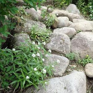2020年8月の山・・・大雪山系 黒岳から姿見の池に縦走
