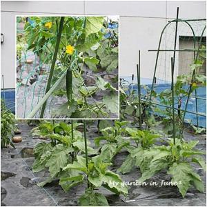 *My garden in June*