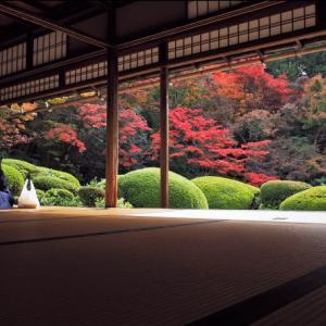 秋の京都で紅葉を撮る!詩仙堂の庭園で紅葉の撮影に行っていました。
