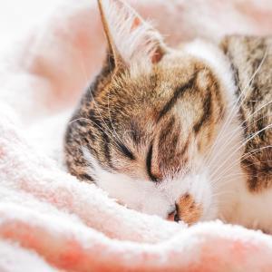 「猫」の写真の撮り方|室内でネコを可愛く撮るときの設定とコツを解説